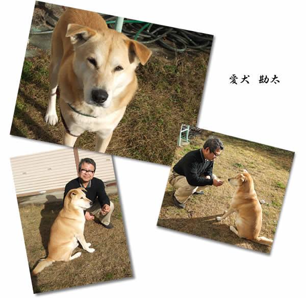 愛犬 勘太