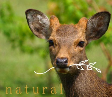 日本鹿の栄養と特徴